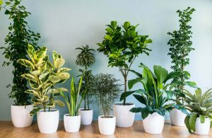 Is dehumidifier water good for plants?